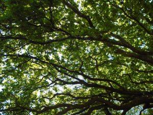 Beltane Branches