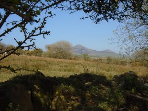 Early spring at Cae Non