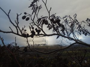 Catkins New Year's Day